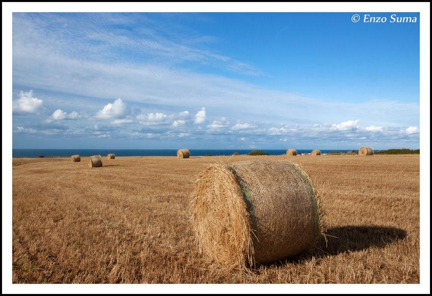 Ostuni, campo di grano ph Enzo Suma