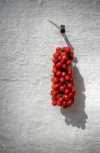 Regina Tomato