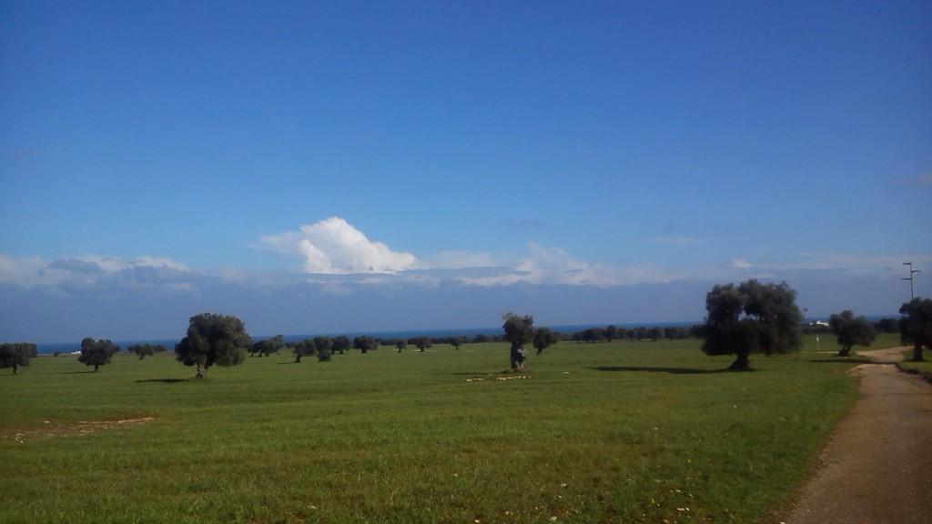 Piana Ulivi Millenari di Puglia