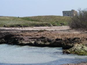 Spiaggia Torre Guaceto